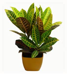 House Plat Gallery For Gt House Plants Png