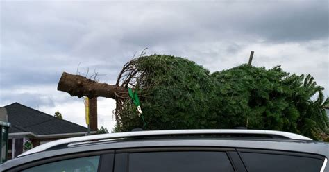 how to get rid of your christmas tree in seattle seattle