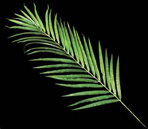 Large Artificial Topiary Trees - artificial palm leaves areca palm frond commercial silk int l