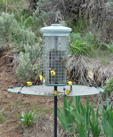 the seed hoop seed catcher platform bird feeder