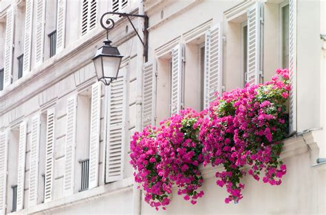paris photograph pink flowers in window basket and shutters
