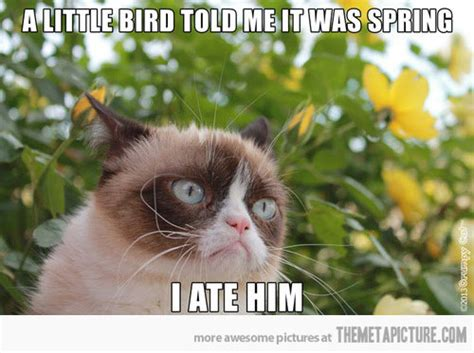 Funny Spring Memes - grumpy cat welcomes spring grumpy cat cat and humor