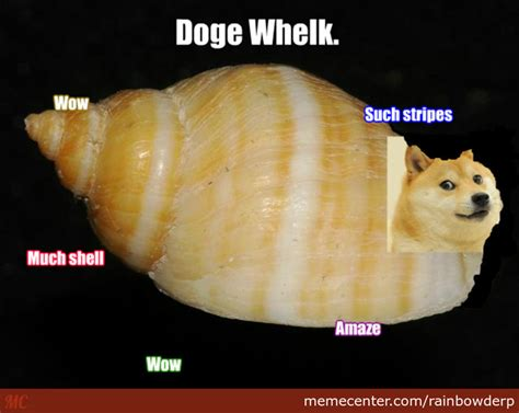 Shibe Meme Maker - shibe the doge whelk by rainbowderp meme center