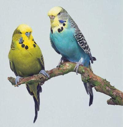 imagenes de animales artrópodos animales fantasticos animales granivoros