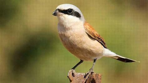 bird animal wallpaper 623786