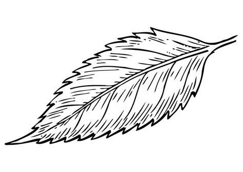 imagenes para colorear hojas dibujo para colorear hoja img 12949