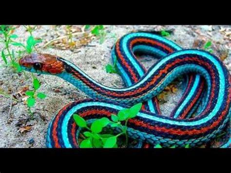 imagenes bonitas e inspiradoras top 5 cobras mais bonitas do mundo youtube