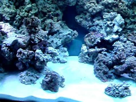 Aquascapes Com Reef Tank Rock Wall Build Youtube