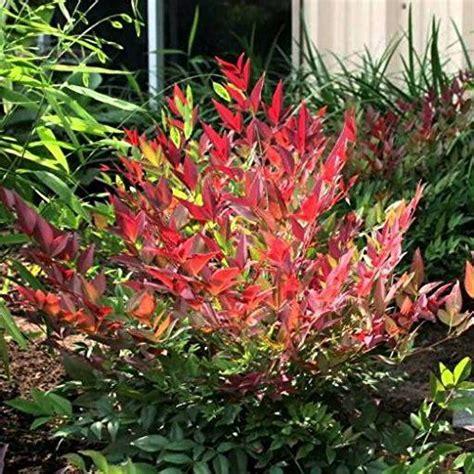 piante da ombra per giardino le 25 migliori idee su piante da ombra su