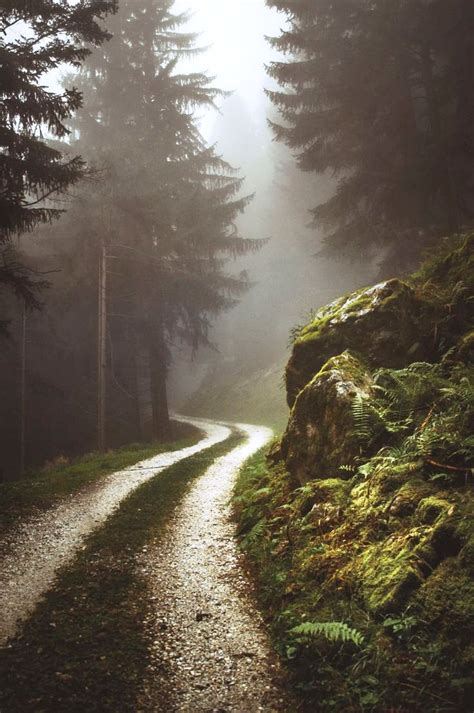 forest photography ideas   inspiration