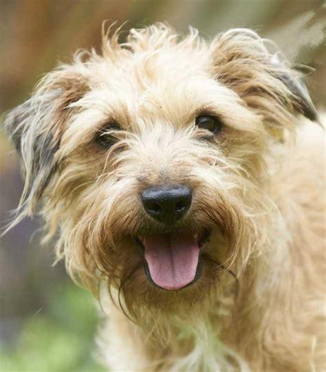 dogs trust sponsor a amelia dogs trust