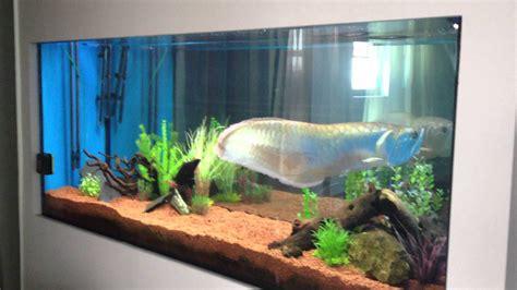 aquarium design for arowana giant arowana and stingray in 1000 l tank youtube