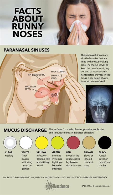 mucus color meanings what your snot says about you infographic