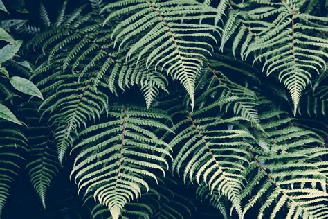 nature pattern tumblr free images nature plant leaf pattern line green