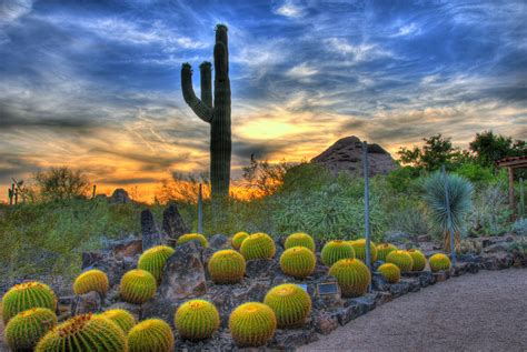 Desert Botanical Garden Arizona Places To Visit In Arizona
