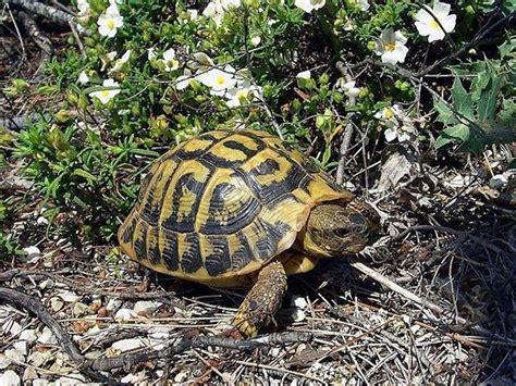 lada per tartarughe di terra tartarughe terra tartarughe tartarughe di terra
