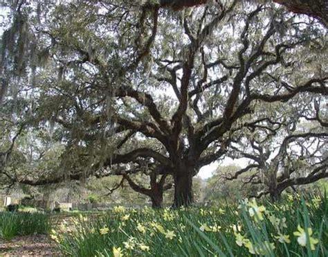 brookgreen plantation murrells inlet georgetown county