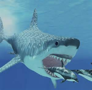 monsterhai megalodon hat sich selbst ausgerottet welt
