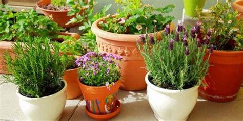 Tanaman Bunga Krisan Remix 4 Pot ingin menjalankan bisnis tanaman hias inilah 4 syarat suksesnya