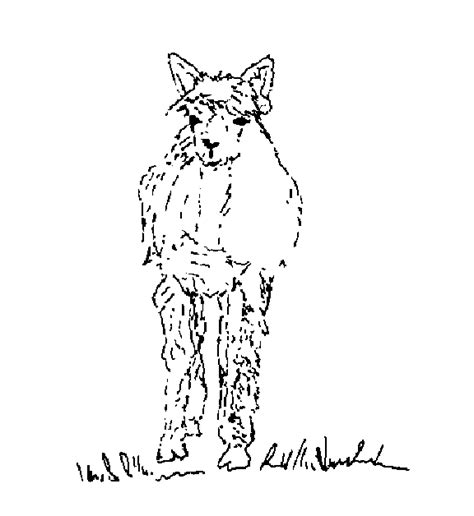 Free Coloring Pages Of Alpaca Alpaca Coloring Pages