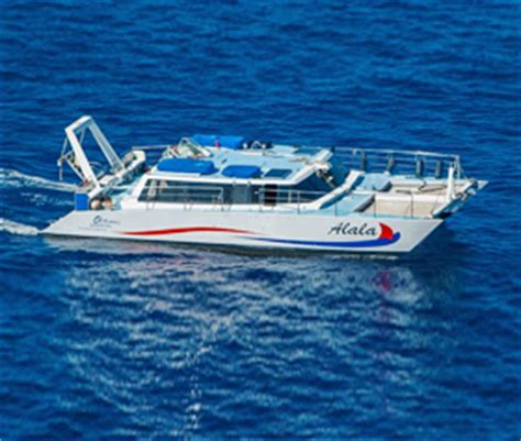 boat cruise hawaii hawaii ocean sports best boat cruises beach activities