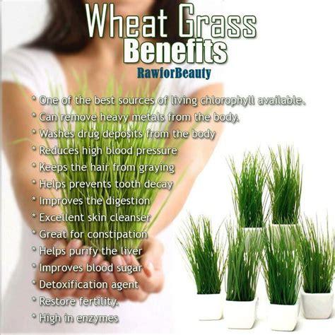 Wellness Wheat Grass 59 best wheatgrass images on