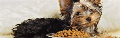 best food for yorkie puppies 5 best food for yorkies review guide 2018