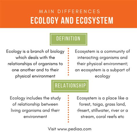 What Is The Difference Between A And A Sofa by Difference Between Ecology And Ecosystem Definition