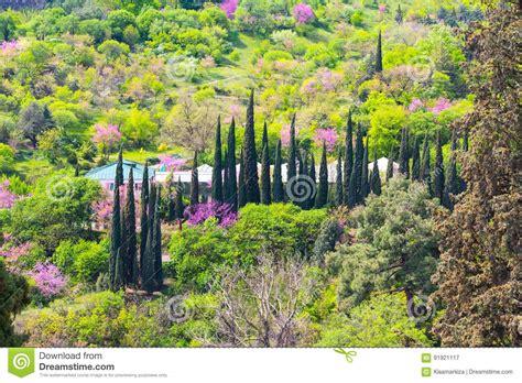parken am englischen garten parken sie landschaft mit zypresse im nationalen