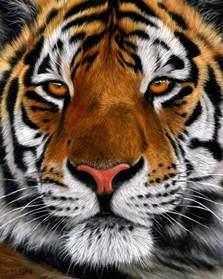 original wildlife art paintings