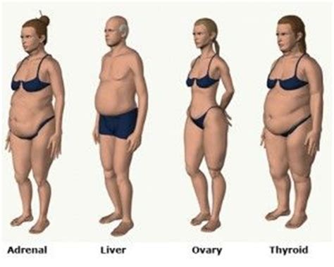 body types and fat distribution   McKinnon Sam   Pinterest   Colors, Workshop and Weight loss