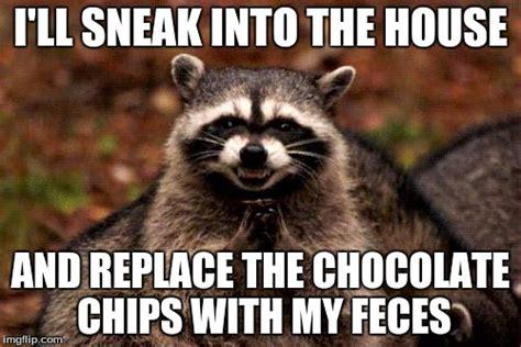 Meme Generator Raccoon - evil plotting raccoon meme imgflip