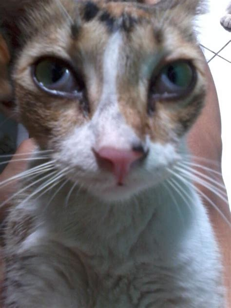 dokter hewan on quot mata kucing berselaput seperti