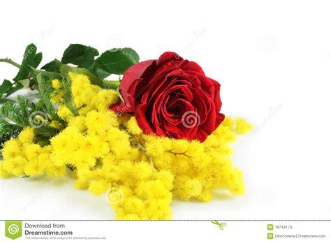 fiore mimosa immagini rosa e mimosa fotografia stock immagine di fiori
