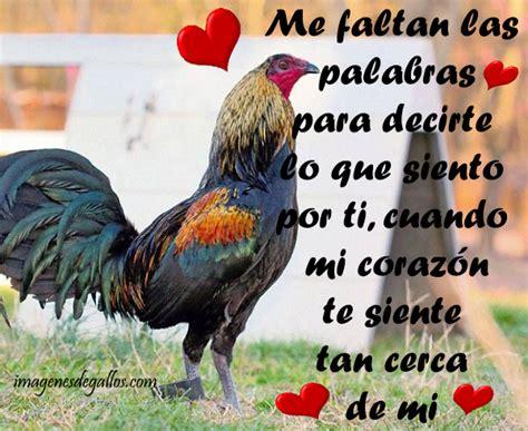imagenes gratis de gallos con frases fotos de gallos con frases de amor para galleros