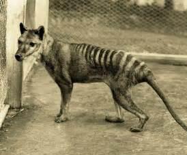 15 animales extintos en los ltimos 250 aos marcianos 15 animales extintos en los 250 ltimos 250 a 241 os marcianos