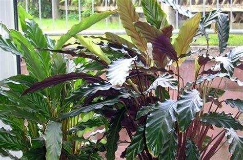 Die Beliebtesten Zimmerpflanzen by Die Beliebtesten Zimmerpflanzen Gartenweb