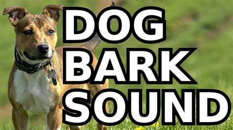 barking sounds bark sound effect high quality free