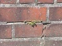 haus neu verfugen fugensanierung klinker mauerwerk fassade