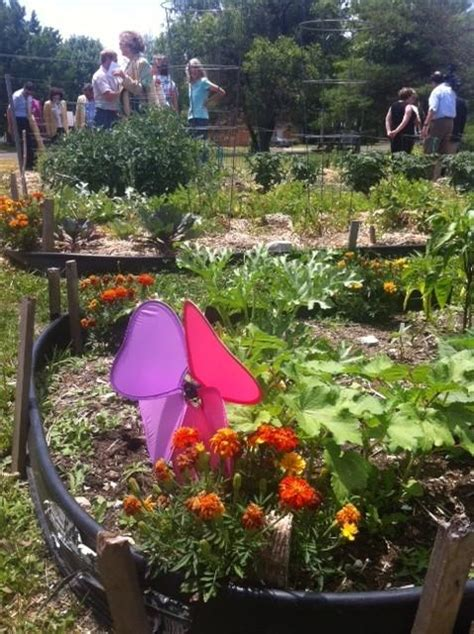 the wellness garden grow eat and walk your way to better health books columbia s community garden kicks growing season kbia