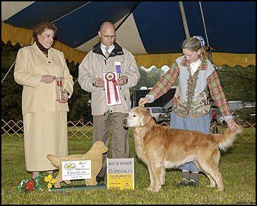 janice provenzano golden retrievers chesapeake golden retriever club 2005 specialty results