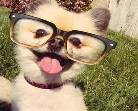funny animals pics compilation topbestpics com