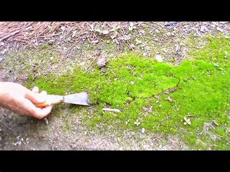 donde encontrar imagenes sin copyright c 243 mo conseguir musgo natural para el bel 233 n youtube