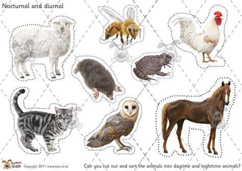 printable nocturnal animal book teacher s pet nocturnal diurnal animal sorting colour