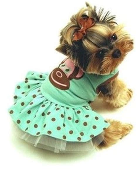 clothes for yorkie puppies best 20 yorkie hairstyles ideas on yorkie hair cuts terrier