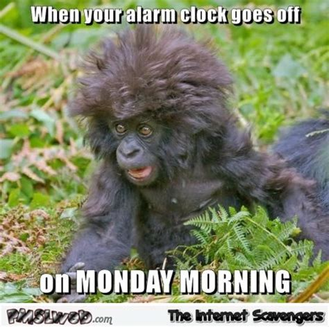 Funny Monday Morning Memes - image gallery monday morning meme