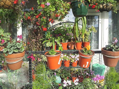 Apartment Plants And Flowers Annual And Perennial Plants Can Be Awesome Decoration For