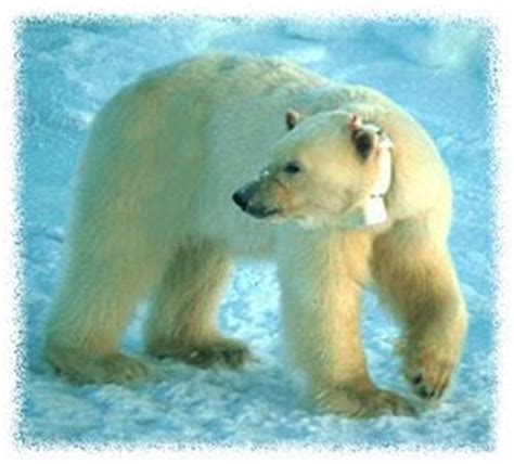imagenes animales acuaticos y terrestres animales acuaticos y terrestres estas son imagenes de