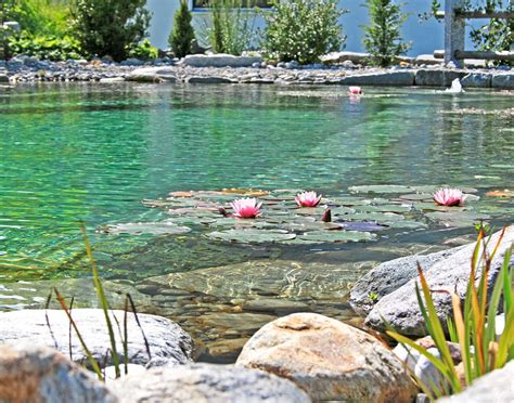 schwimmteich bildergalerie mit beispielen vieler schwimmteiche