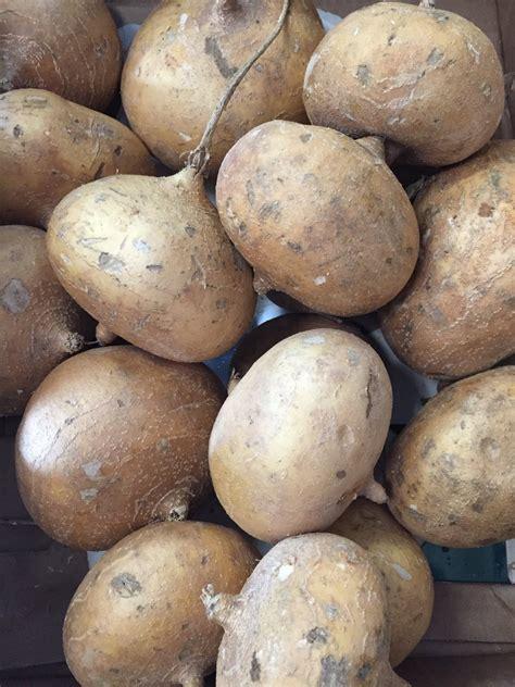 vegetables jicama jicama c l produce